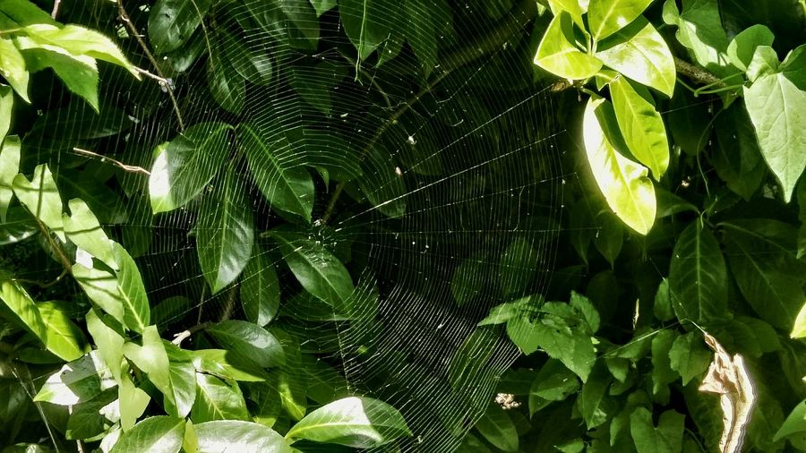Blätter-Gewirr=Vernetzt/Netz,Faden _ Glowing ... Fade In Netzwerk Spinnennetz Radnetz Art Is Everywhere The Secret Spaces