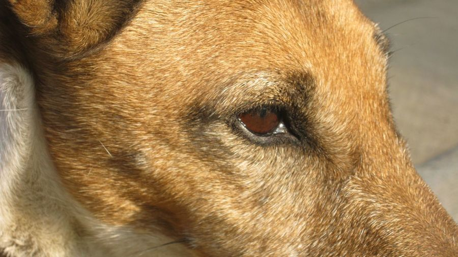Close-up Of Dog
