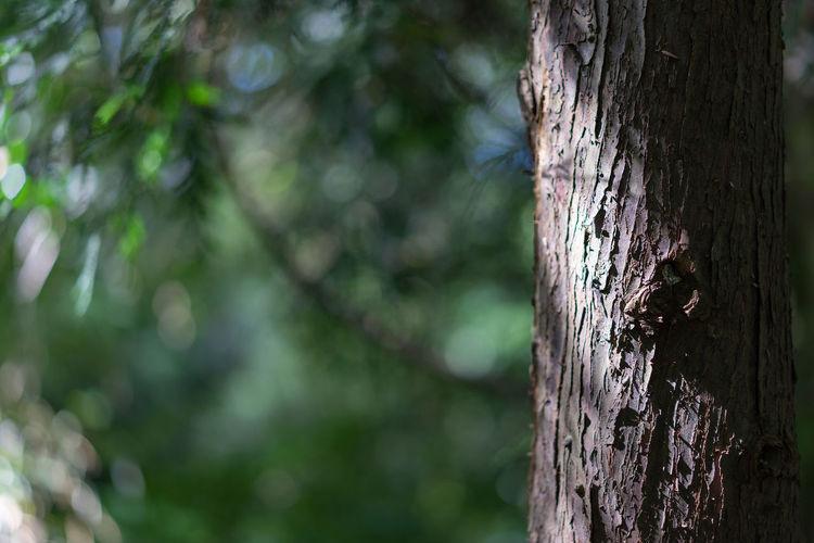 Close-up of caterpillar on tree trunk