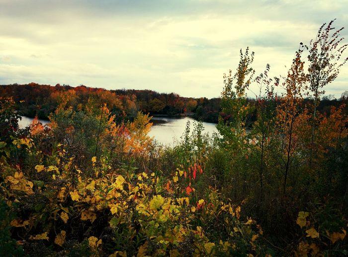 Beautiful walk in Centennial park. Fall Scenery First Eyeem Photo