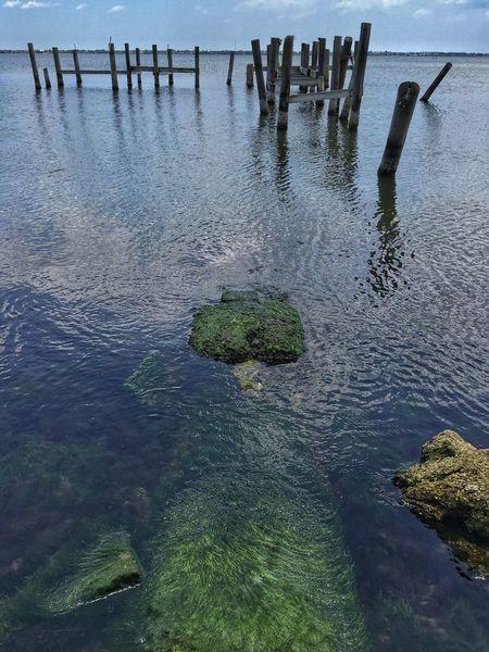 Green algae & old pilings Indian River Indian River Lagoon Riverscape River View Melbourne Florida Lagoon Pilings Algae Seaweed