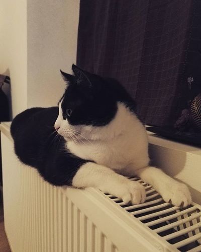 Mimo cicus Cat Mycat Lovelycat Katze Cica Cold Winter Home