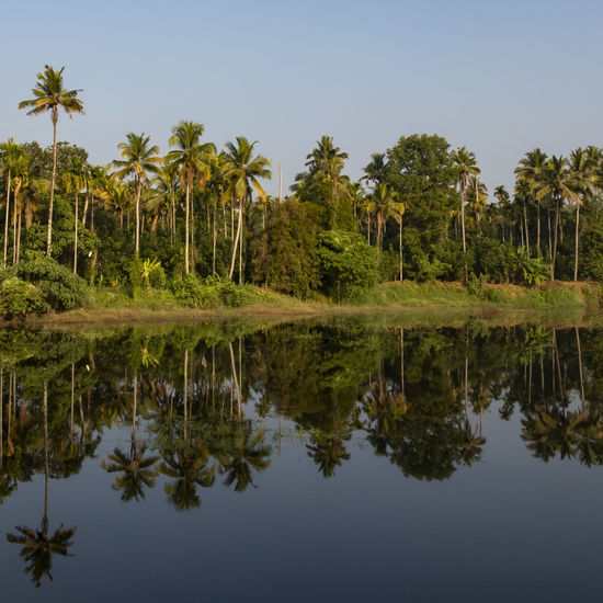 Reflections in the Periyar River Tree Reflection Plant Sky Palm Tree Tropical Climate Water Beauty In Nature Tranquility Scenics - Nature Waterfront Lake Nature Tranquil Scene Growth No People Land Green Color Day Outdoors Coconut Palm Tree