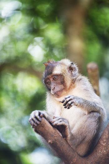 Cute monkey on tree