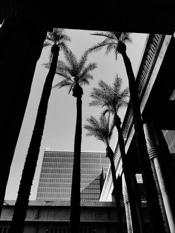 Palm Tree Low Angle View Tree Built Structure Sky No People Building Exterior Nature Monochrome Photography Dramatic Angles