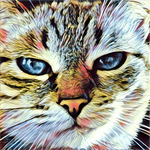 Domestic Cat Looking At Camera Animal Themes One Animal Feline Domestic Animals Pets Portrait Mammal Close-up No People Whisker Backgrounds Full Frame Animal Eye Yellow Eyes Day Outdoors Drawing - Art Product Drawing Art, Drawing, Creativity Art And Craft Art Artwork Painting The Painter