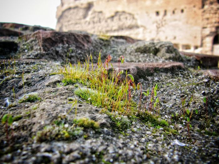 Forum Romanum Foro Romano Rom Rome Roma Italy Italia Rock - Object Outdoors Nature Architecture Beauty In Nature Close-up Moss Moss-covered Moss Close Up Your Ticket To Europe