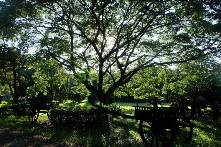 Tree Plant Growth Nature Park Day Land Seat Bench Beauty In Nature No People Green Color Outdoors Tranquility Absence Table Empty Sunlight Grass Branch Park Bench Wheel