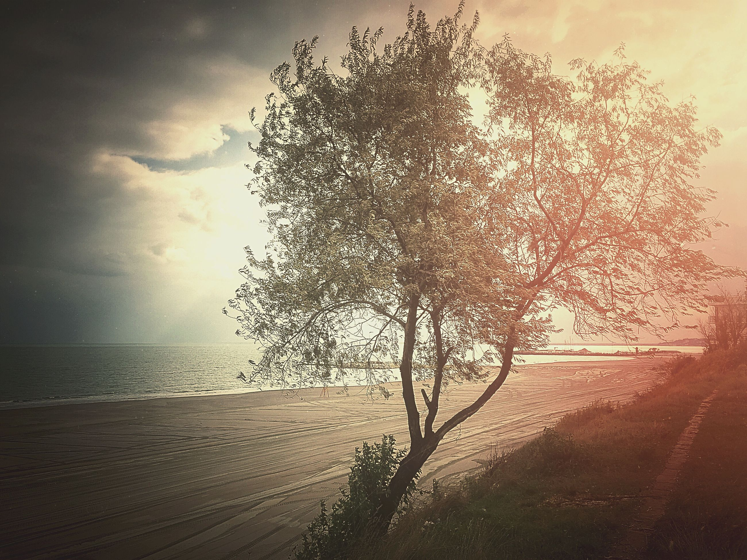 sky, tree, tranquility, tranquil scene, nature, beauty in nature, horizon over water, sea, scenics, cloud - sky, beach, sunset, growth, water, sunlight, branch, cloud, outdoors, no people, shore