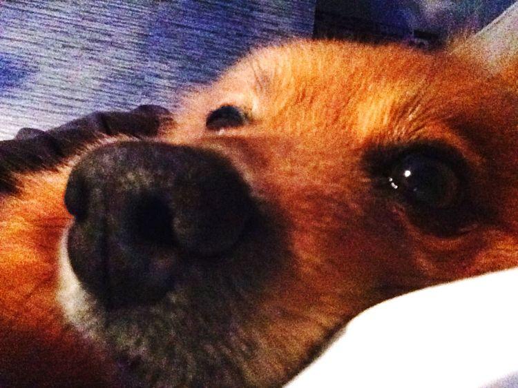 Coleen my Dog Dog I Love My Dog Cute Pets Love IPhoneography Popular Photos Selfiedog Selfie Goodnight