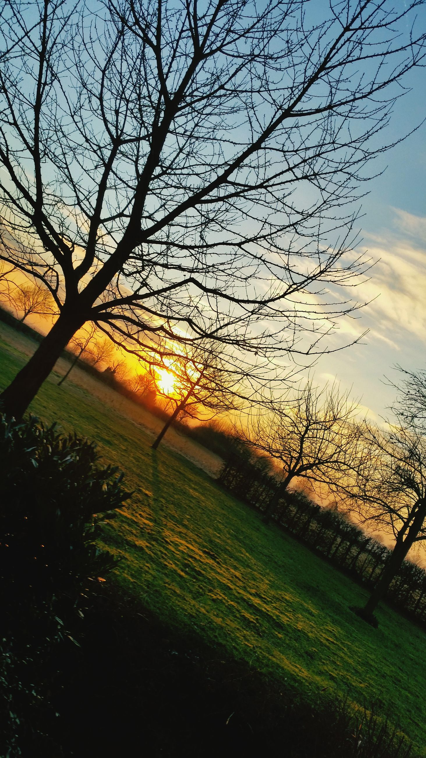 sunset, sun, tree, field, tranquility, grass, tranquil scene, sky, landscape, scenics, beauty in nature, nature, sunlight, bare tree, orange color, branch, growth, idyllic, sunbeam, silhouette