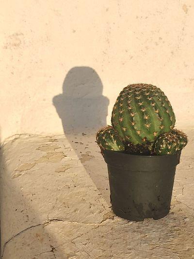 Cactus's shadow