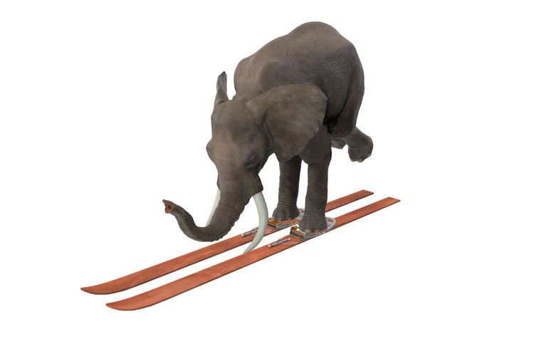 White Background Studio Shot Mammal Animal No People Indoors  Animal Themes Copy Space Domestic Animals Art And Craft Elephant Animal Representation Representation One Animal Creativity Sculpture Craft Cut Out Domestic Still Life Ski