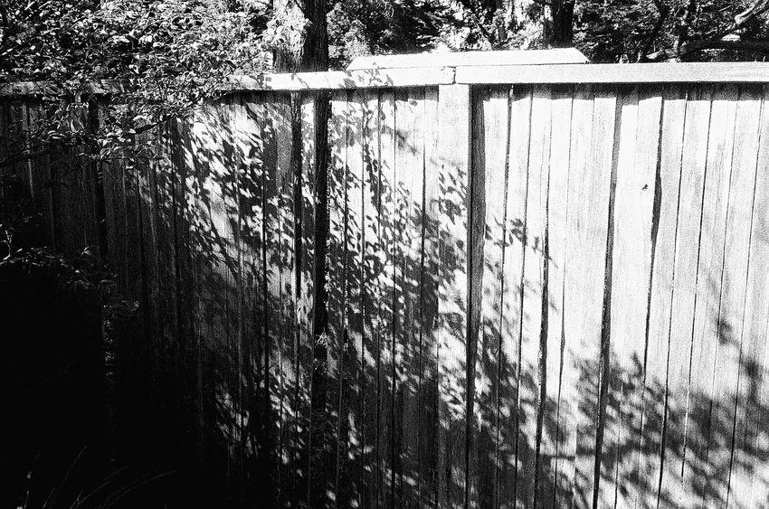 NATURA Classica Ilford Delta 3200 Tree Fence Wood - Material Sunlight Koduckgirl Blknwht Carmel California Film Grainy Photo