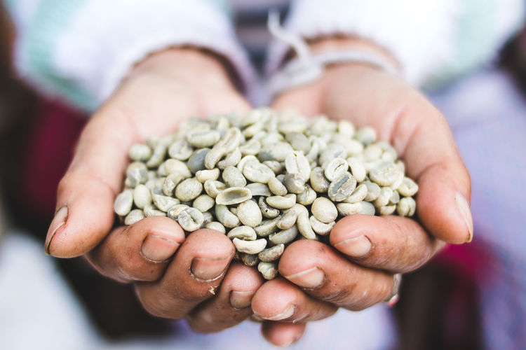 Arabica green bean coffee unroasted in old hand Abundance Close-up Coffee Bean Day Focus On Foreground Food Food And Drink Freshness Hands Cupped Healthy Eating Holding Human Body Part Human Hand Indoors  Large Group Of Objects Men Midsection One Person People Raw Coffee Bean Real People Seed