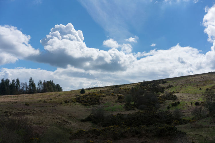 The three Lochs way Scotland Sky Cloud - Sky Environment Tranquil Scene Landscape Tranquility Scenics - Nature Beauty In Nature Land Non-urban Scene Nature No People Day Plant Field Outdoors Tree Idyllic Hill Remote