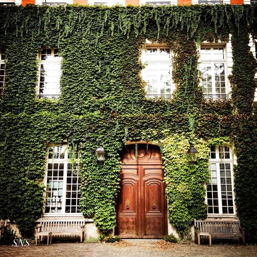 Mitten in Paris Paris Architecture Built Structure Building Exterior No People Building Door Day Communication Entrance Plant Text Closed Western Script Window Outdoors Ivy Wall - Building Feature Green Color House Nature