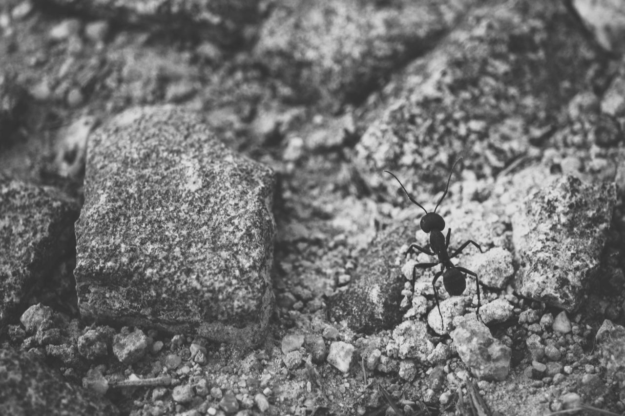HIGH ANGLE VIEW OF ANTS ON ROCK