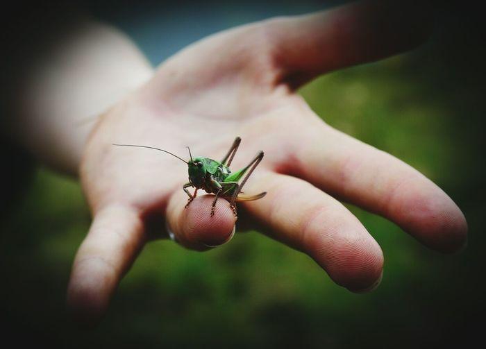 Close-up of grasshopper on finger