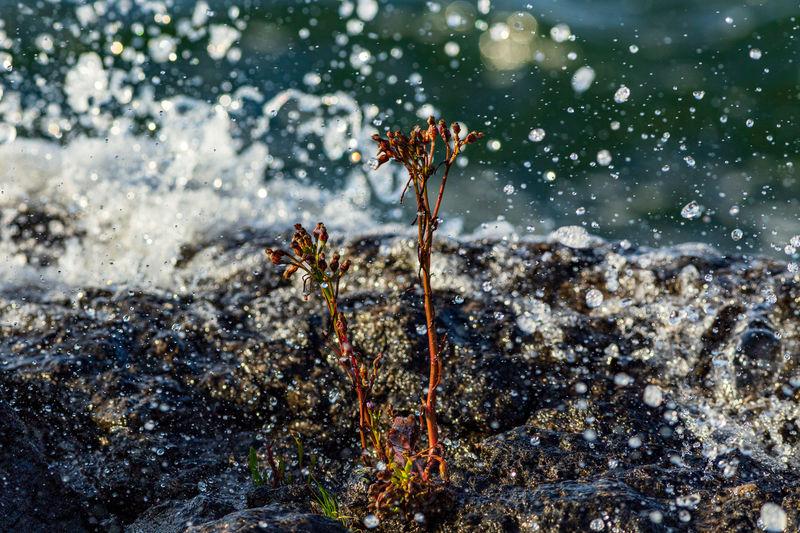 Close-up of wet flowering plants during rainy season