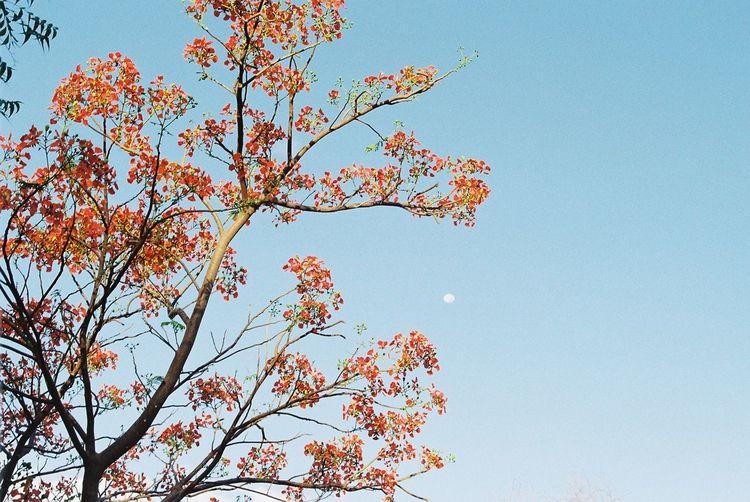 Film India Minolta Moon Tree Nature Tamil Nadu Tranquility