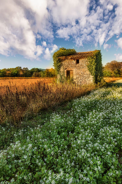 Lost in Provence Abandoned Abandoned Buildings Architecture Beauty In Nature Built Structure Cloud - Sky Day Field Grass Green Color Landscape Nature No People Old Old Barn Outdoors Plant Rural Scene Scenics Sky Stone The Great Outdoors - 2017 EyeEm Awards Tranquility Tree