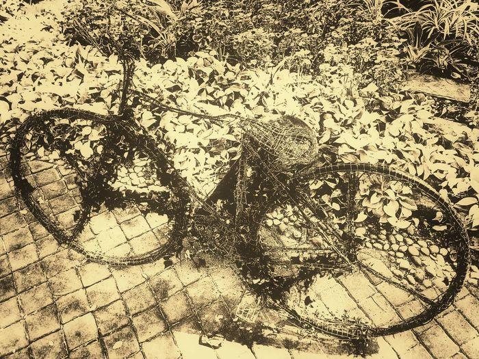 Bicycle Art Art Photography Bicycle