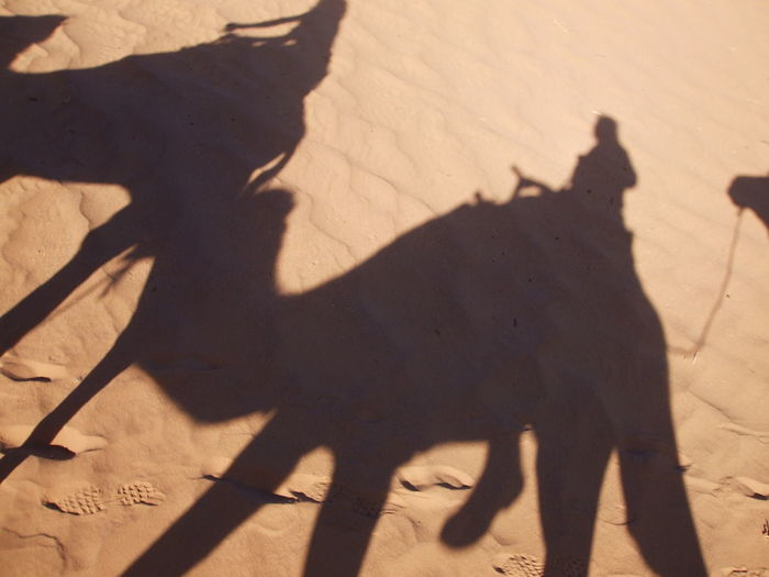 Shadow of man with dog standing on sand