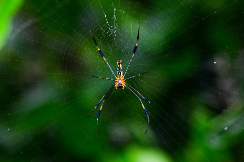 Animal Themes Beauty In Nature Close-up Nature Spider Spider Spider Web Web Wildlife