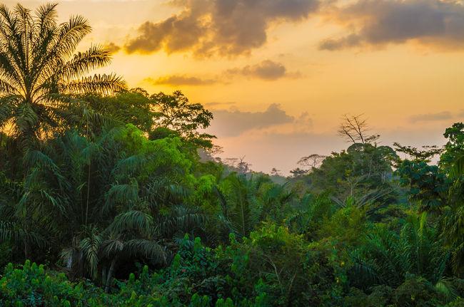 Sunset Lush Foliage Lush West Africa Liberian Liberia Rain Forest Rainforest Forest Jungle Landscape African Africa Nature
