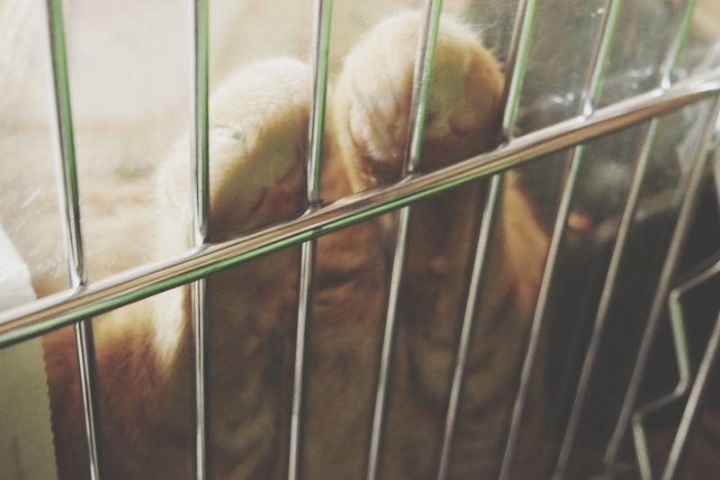 うちの猫 Cat's Paw