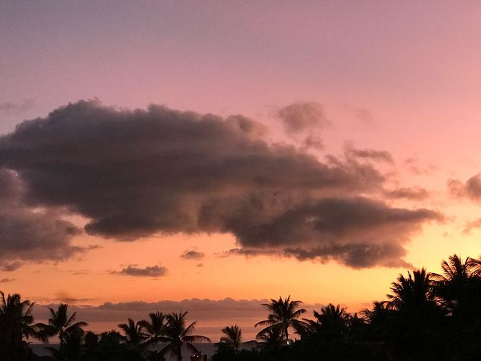 Sunset Silhouette Sky Beauty In Nature Scenics Palm Tree Dramatic Sky Tranquility Tranquil Scene No People Landscape Outdoors Ko Olina