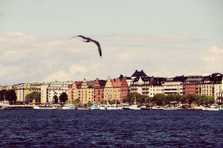 Birds flying over river in city against sky
