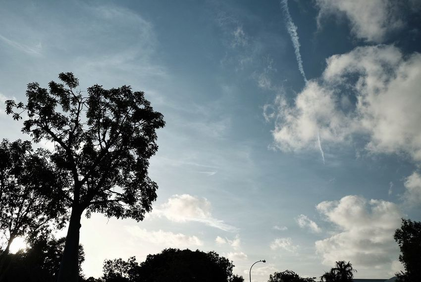 Tree Cloud - Sky Nature Sky No People Low Angle View Outdoors Beauty In NatureBeauty Of Nature Outdoor Tree LandscapeForest Landscape_photography Scenics Scenery Australian Landscape Nature Sky And Clouds Forest Photography Day
