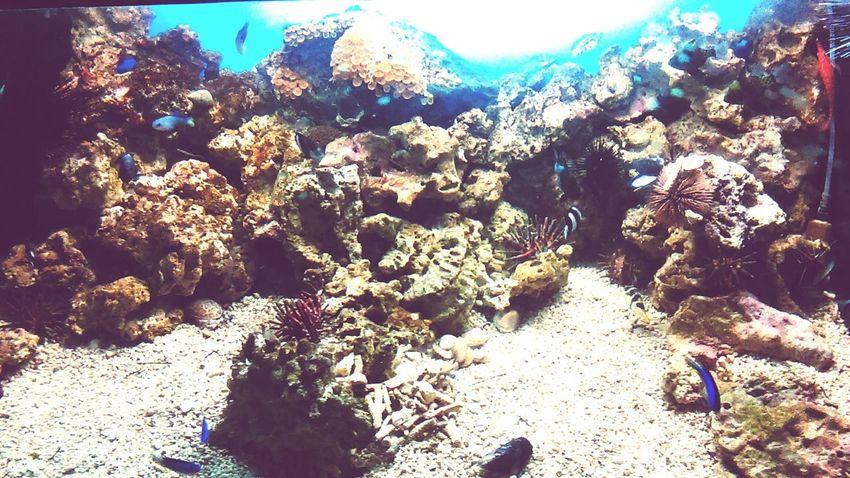 Enjoying Life Fish Coral Denver Aquarium Colorado