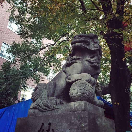 """新宿 花園神社 酉の市 せっかくなので花園神社まで遠征したのだけど…""""酉の市""""は昨日までだったのね?酉の市って日にちが決まっていて連休だからやるとかのものではないのですよ…?ということで今日は花園神社で打ち止めです…。"""