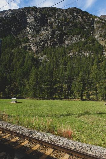 Railroad tracks by trees on field