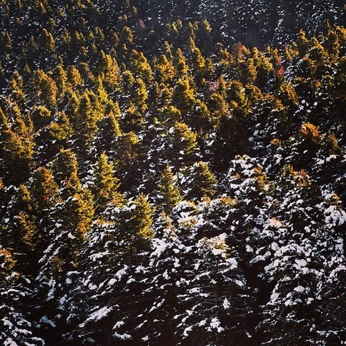 Bolu  Abant Kar Kış gölcük tabiat orman forest winter cold holidays TagsForLikes snow rain christmas snowing blizzard snowflakes wintertime staywarm cloudy instawinter instagood holidayseason photooftheday season seasons nature