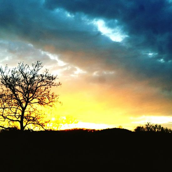 Silhouette of bare trees on landscape against sunset sky