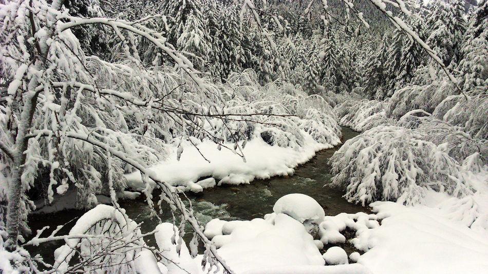 Cold Temperature Frozen Nature Scenics Snow Tranquil Scene Tranquility Val Pusteria White Color Winter