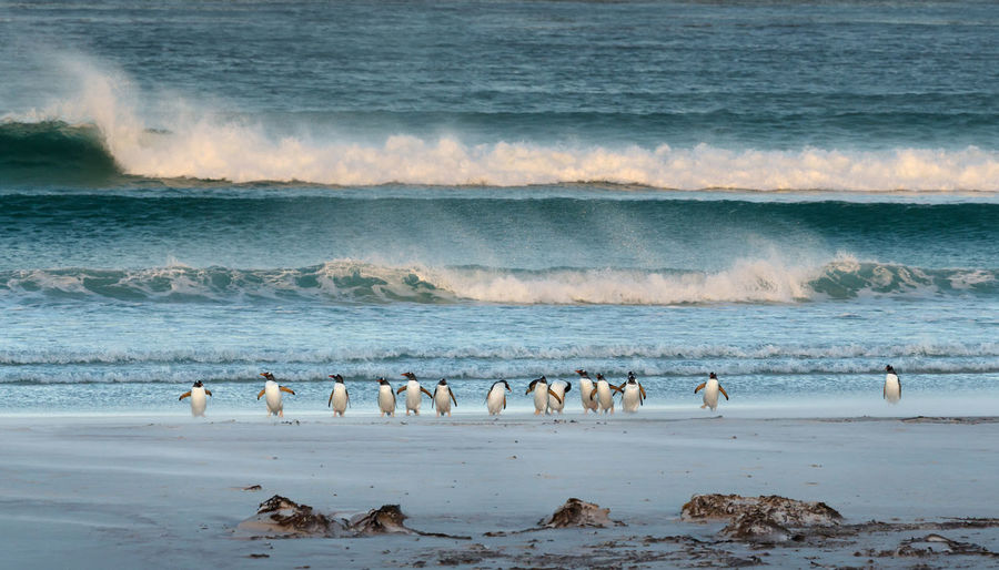 Penguins perching on shore at beach