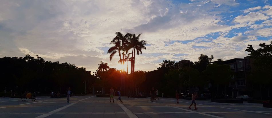 Beautiful sky at Minsheng park - Songshan Sky Skyandclouds  Outdoors adventures in the city Kids Taipei Taiwan Happy Songshan Taiwanese Love City Tree Palm Tree Silhouette Sunset Sky Cloud - Sky