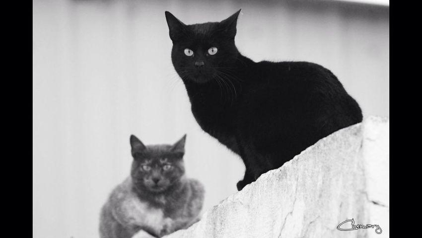 CatNature
