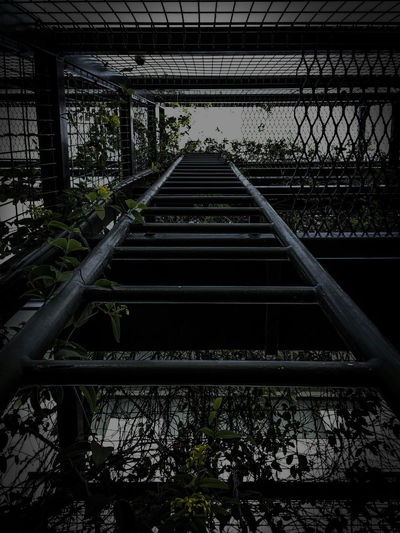Go places where people say you can't. Ladder Photography Vines Showcase: February