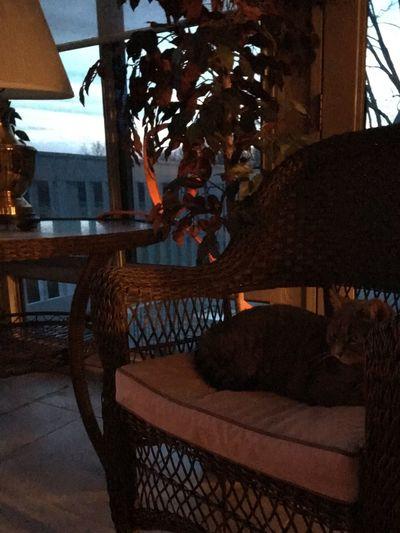 Cat Fireplace Inside Firelight Relaxing