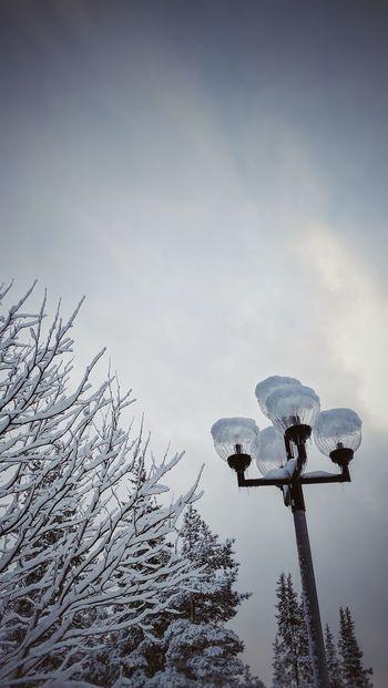 Sky Sweden Snow Nature Branches Trees Tree Winter Winter Wonderland Winter Scenery Skiing 🎿 Light Pole