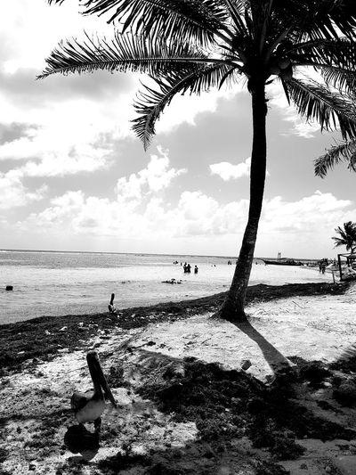 Mahahual Beach Sea Horizon Over Water Silhouette Cloud - Sky Water Nature Sand Beauty In Nature Sky Bird No People Day