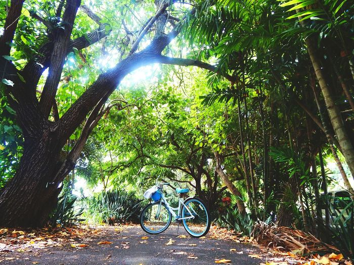 My Hobby Bikinginhawaii Biking&traveling Summertime Hawaiishots Streetphotography Colors Eyemnaturelover Bicycle Tree Tranquility Beauty In Nature No People Adventure Outdoors Summer Exploratorium