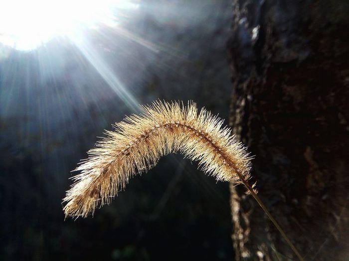 Sunbeam Nature Plant Close-up Botany Seeds Macro Maximum Closeness Mobilephotography LeTv X600 Letv LeEco