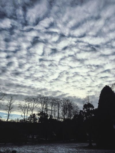 Valley Gardens Cloudscape Silhouette Tree Sky Nature Beauty In Nature Cloud - Sky Tranquility Outdoors Landscape